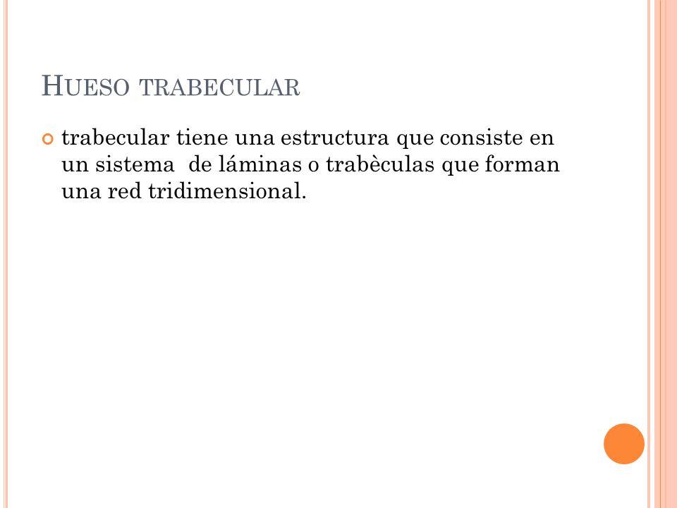 trabecular tiene una estructura que consiste en un sistema de láminas o trabèculas que forman una red tridimensional. H UESO TRABECULAR
