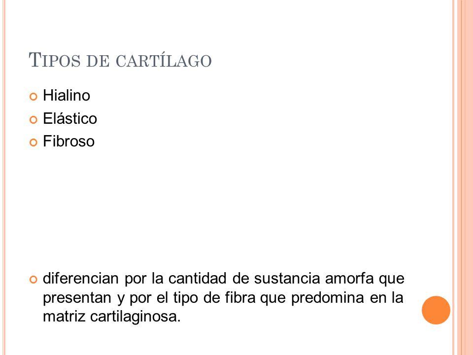T IPOS DE CARTÍLAGO Hialino Elástico Fibroso diferencian por la cantidad de sustancia amorfa que presentan y por el tipo de fibra que predomina en la