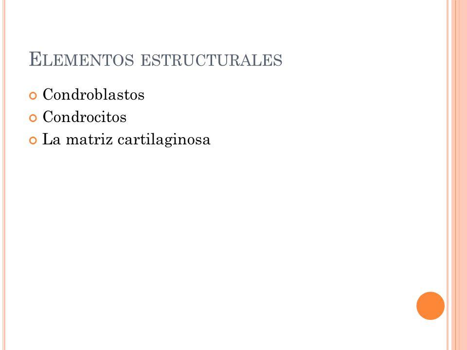 E LEMENTOS ESTRUCTURALES Condroblastos Condrocitos La matriz cartilaginosa