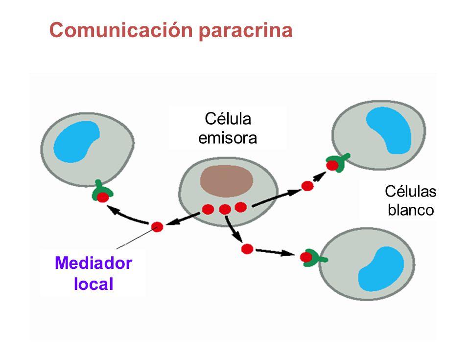 Comunicación paracrina Mediador local Célula emisora Células blanco