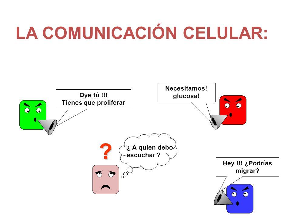 LA COMUNICACIÓN CELULAR: ? Oye tú !!! Tienes que proliferar Necesitamos! glucosa! Hey !!! ¿Podrías migrar? ¿ A quien debo escuchar ?