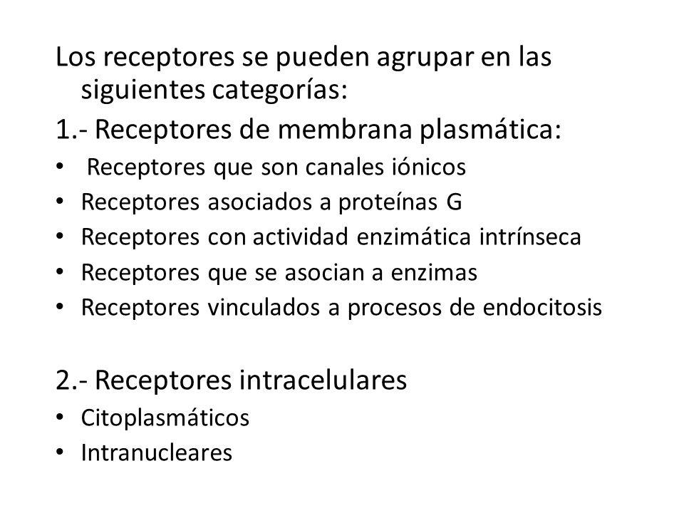 Los receptores se pueden agrupar en las siguientes categorías: 1.- Receptores de membrana plasmática: Receptores que son canales iónicos Receptores as