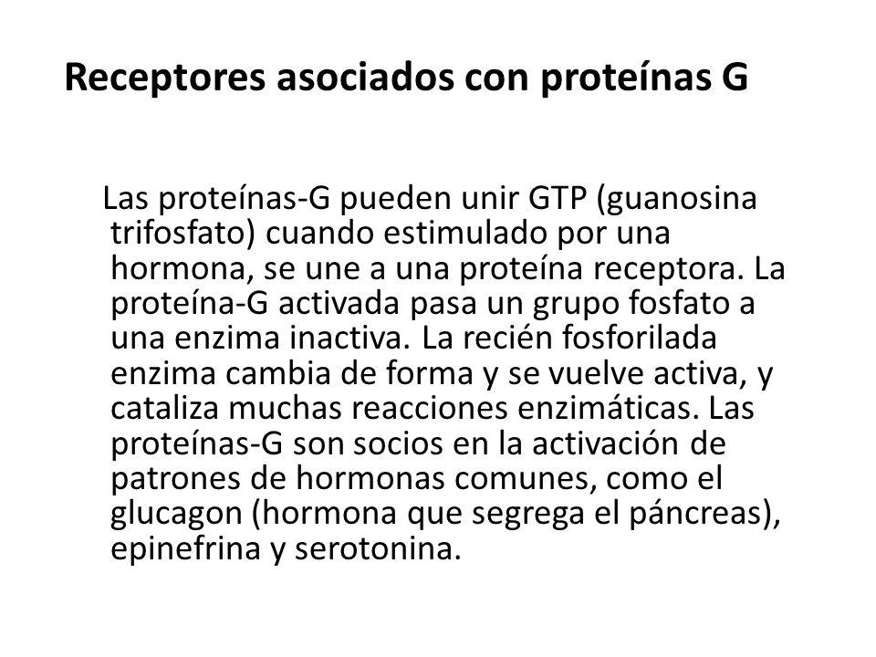 Receptores asociados con proteínas G Las proteínas-G pueden unir GTP (guanosina trifosfato) cuando estimulado por una hormona, se une a una proteína r