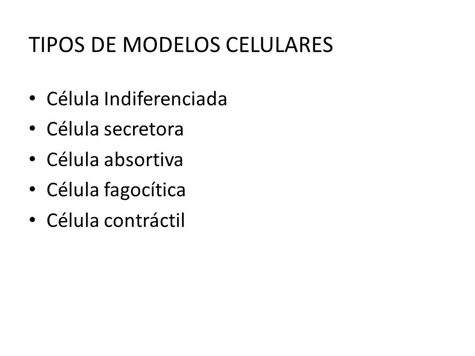 TIPOS DE MODELOS CELULARES Célula Indiferenciada Célula secretora Célula absortiva Célula fagocítica Célula contráctil
