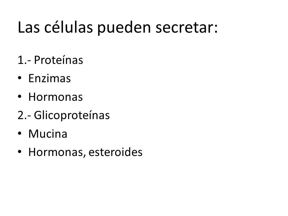 Las células pueden secretar: 1.- Proteínas Enzimas Hormonas 2.- Glicoproteínas Mucina Hormonas, esteroides