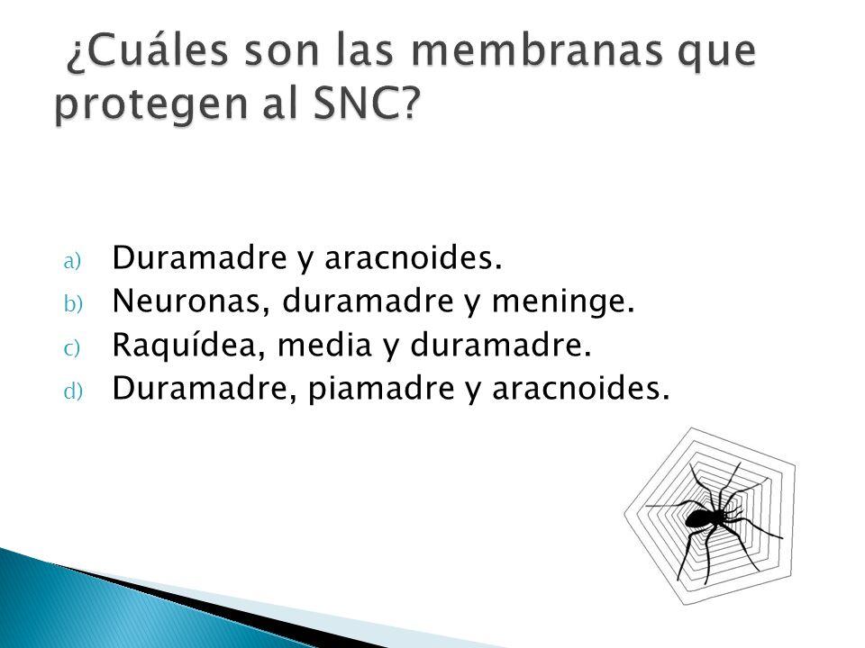 a) Duramadre y aracnoides. b) Neuronas, duramadre y meninge. c) Raquídea, media y duramadre. d) Duramadre, piamadre y aracnoides.