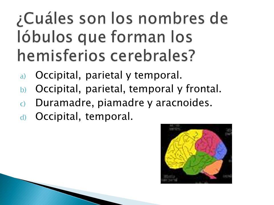 a) Occipital, parietal y temporal. b) Occipital, parietal, temporal y frontal. c) Duramadre, piamadre y aracnoides. d) Occipital, temporal.