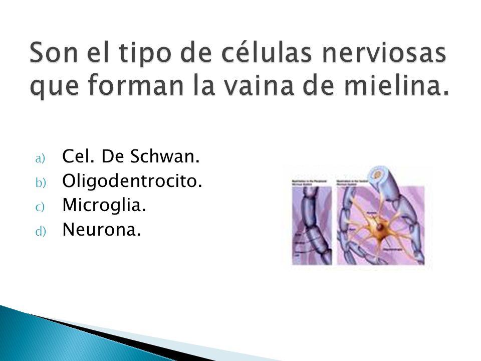 a) Cel. De Schwan. b) Oligodentrocito. c) Microglia. d) Neurona.