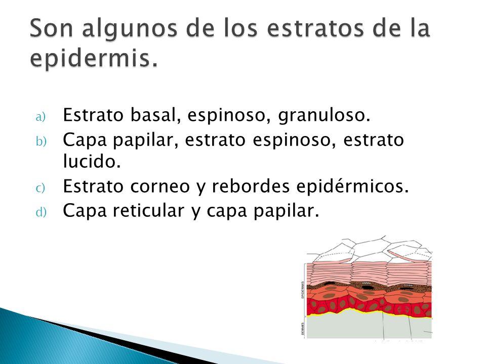 a) Estrato basal, espinoso, granuloso. b) Capa papilar, estrato espinoso, estrato lucido. c) Estrato corneo y rebordes epidérmicos. d) Capa reticular