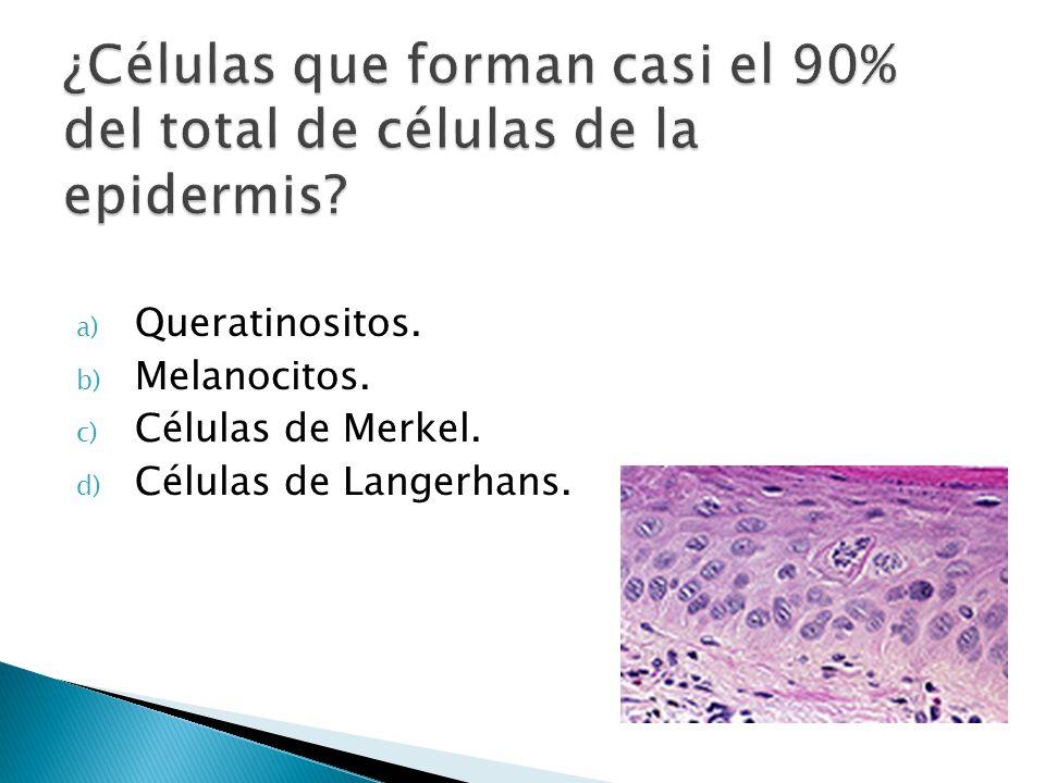 a) Queratinositos. b) Melanocitos. c) Células de Merkel. d) Células de Langerhans.