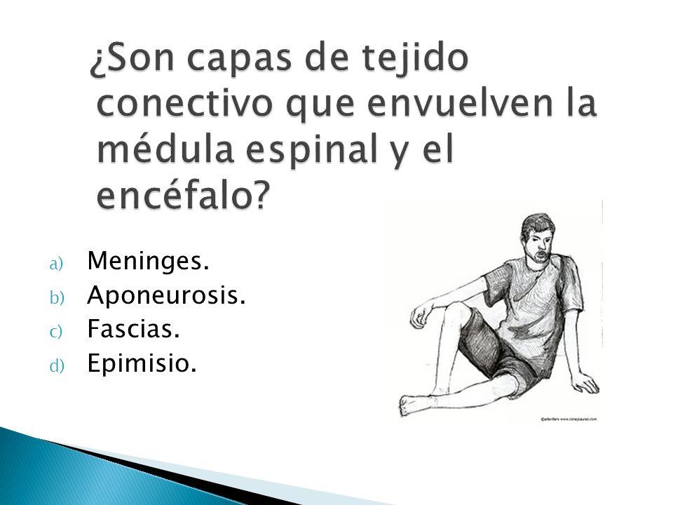 a) Meninges. b) Aponeurosis. c) Fascias. d) Epimisio.