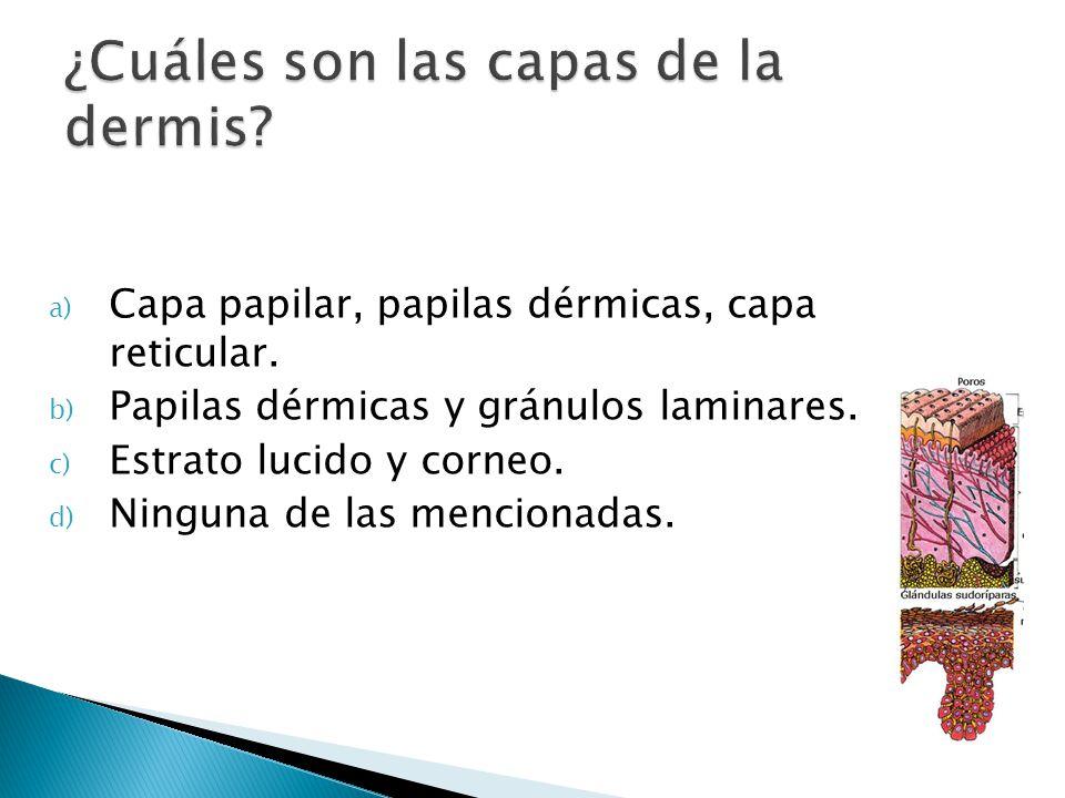 a) Capa papilar, papilas dérmicas, capa reticular. b) Papilas dérmicas y gránulos laminares. c) Estrato lucido y corneo. d) Ninguna de las mencionadas