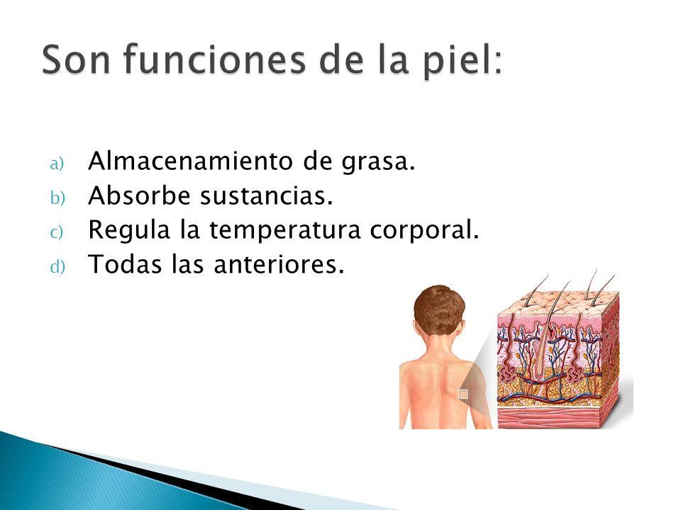 a) Almacenamiento de grasa. b) Absorbe sustancias. c) Regula la temperatura corporal. d) Todas las anteriores.