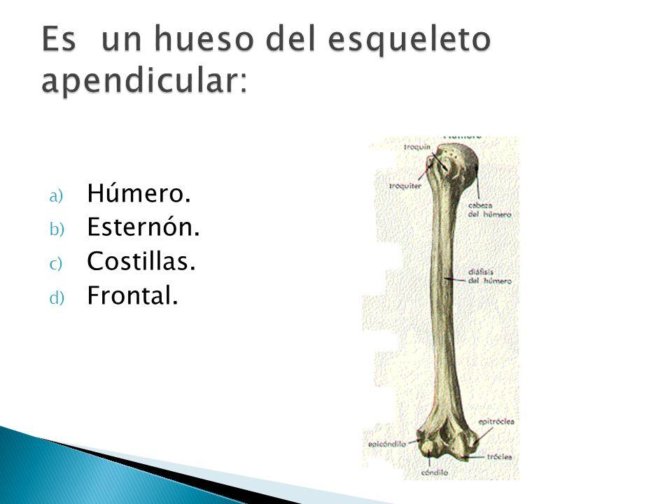a) Húmero. b) Esternón. c) Costillas. d) Frontal.