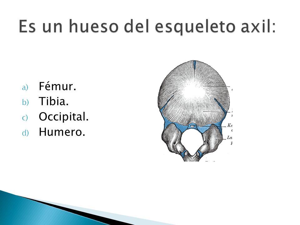 a) Fémur. b) Tibia. c) Occipital. d) Humero.