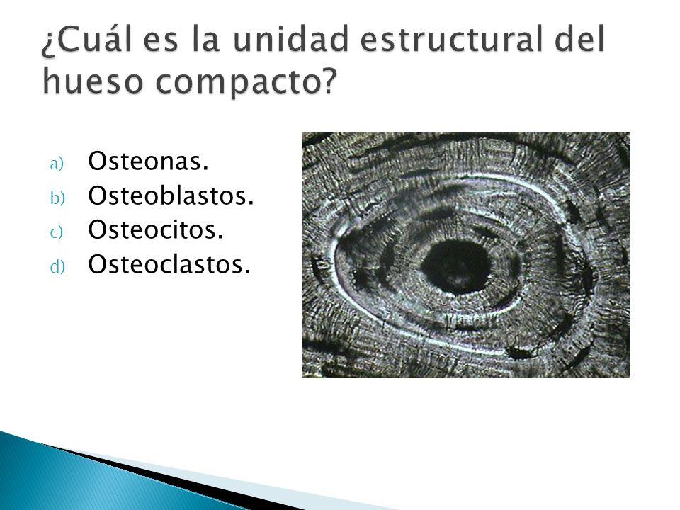 a) Osteonas. b) Osteoblastos. c) Osteocitos. d) Osteoclastos.