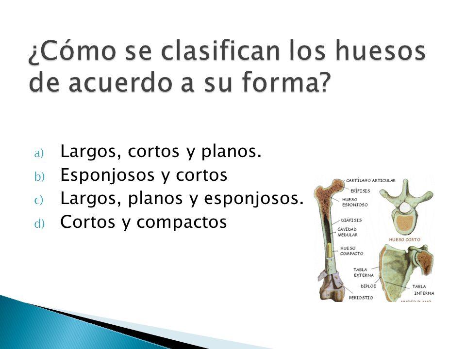 a) Largos, cortos y planos. b) Esponjosos y cortos c) Largos, planos y esponjosos. d) Cortos y compactos