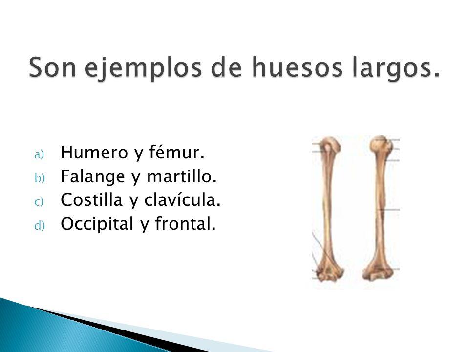 a) Humero y fémur. b) Falange y martillo. c) Costilla y clavícula. d) Occipital y frontal.