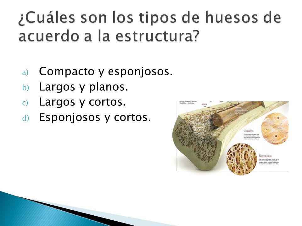 a) Compacto y esponjosos. b) Largos y planos. c) Largos y cortos. d) Esponjosos y cortos.