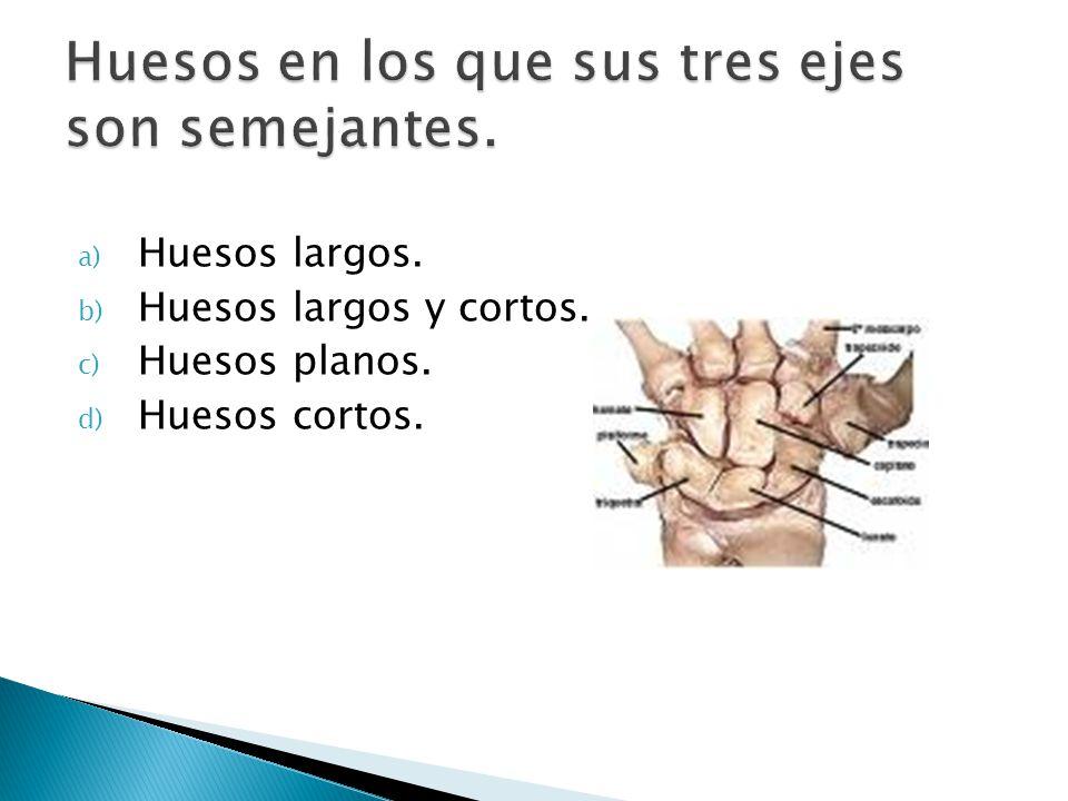 a) Huesos largos. b) Huesos largos y cortos. c) Huesos planos. d) Huesos cortos.