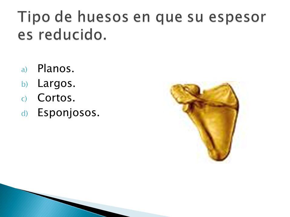 a) Planos. b) Largos. c) Cortos. d) Esponjosos.