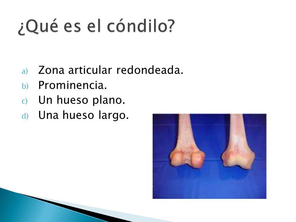 a) Zona articular redondeada. b) Prominencia. c) Un hueso plano. d) Una hueso largo.