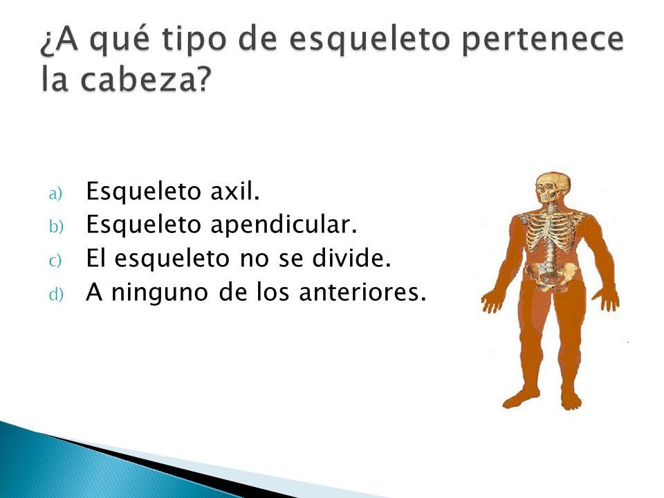 a) Esqueleto axil. b) Esqueleto apendicular. c) El esqueleto no se divide. d) A ninguno de los anteriores.