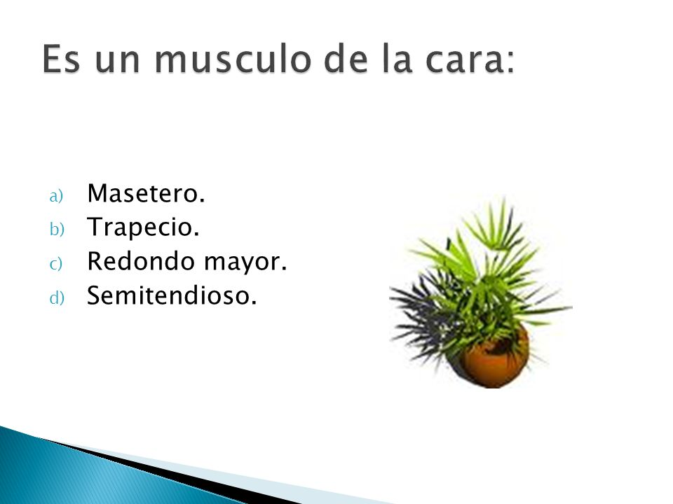 a) Masetero. b) Trapecio. c) Redondo mayor. d) Semitendioso.
