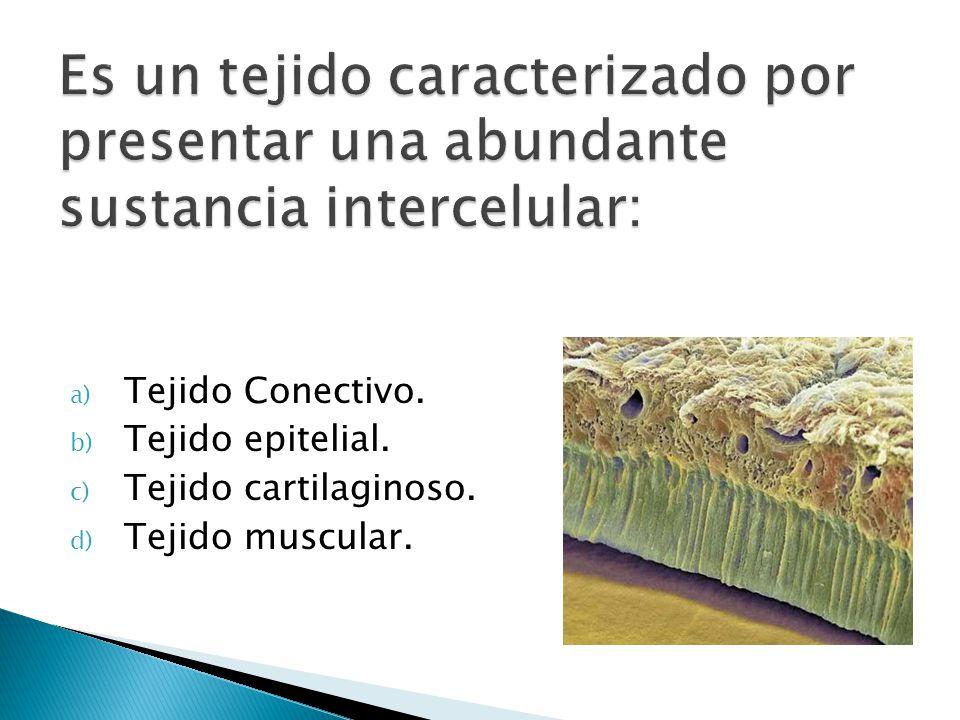 a) Tejido Conectivo. b) Tejido epitelial. c) Tejido cartilaginoso. d) Tejido muscular.