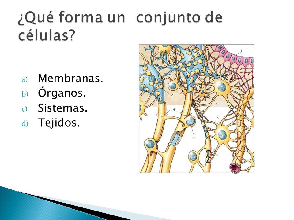 a) Membranas. b) Órganos. c) Sistemas. d) Tejidos.