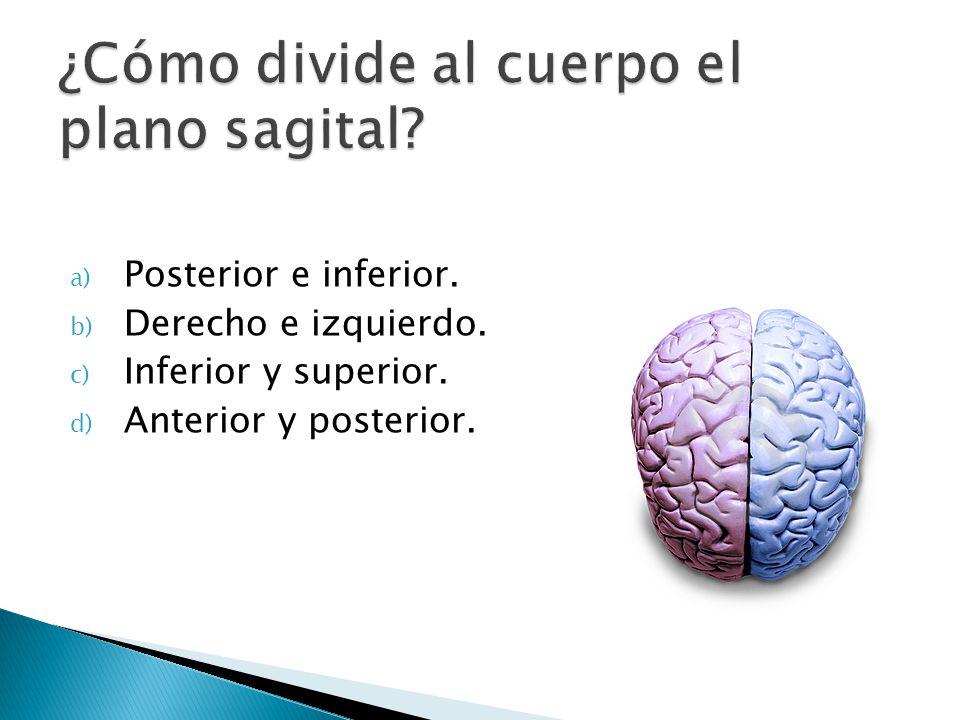 a) Posterior e inferior. b) Derecho e izquierdo. c) Inferior y superior. d) Anterior y posterior.