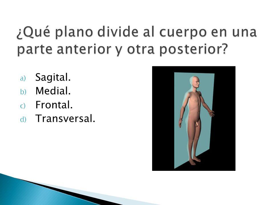 a) Sagital. b) Medial. c) Frontal. d) Transversal.