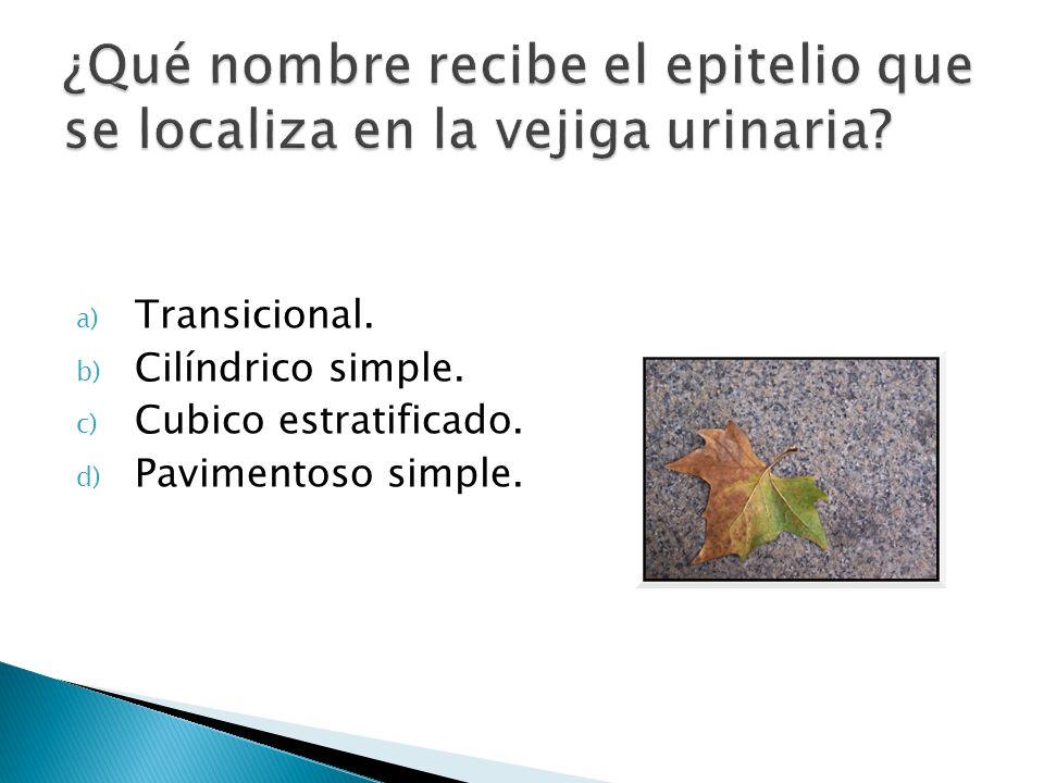 a) Transicional. b) Cilíndrico simple. c) Cubico estratificado. d) Pavimentoso simple.