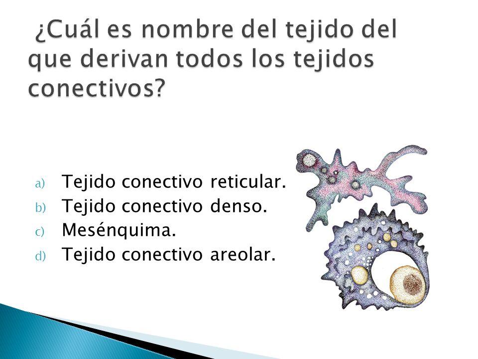 a) Tejido conectivo reticular. b) Tejido conectivo denso. c) Mesénquima. d) Tejido conectivo areolar.
