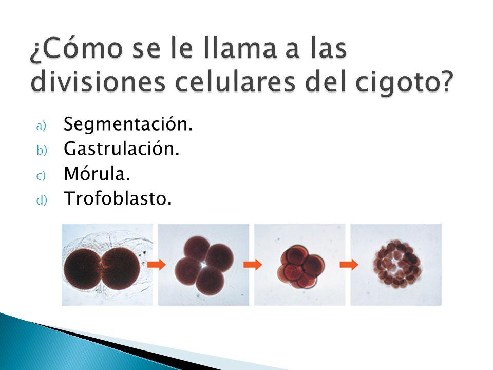 a) Segmentación. b) Gastrulación. c) Mórula. d) Trofoblasto.