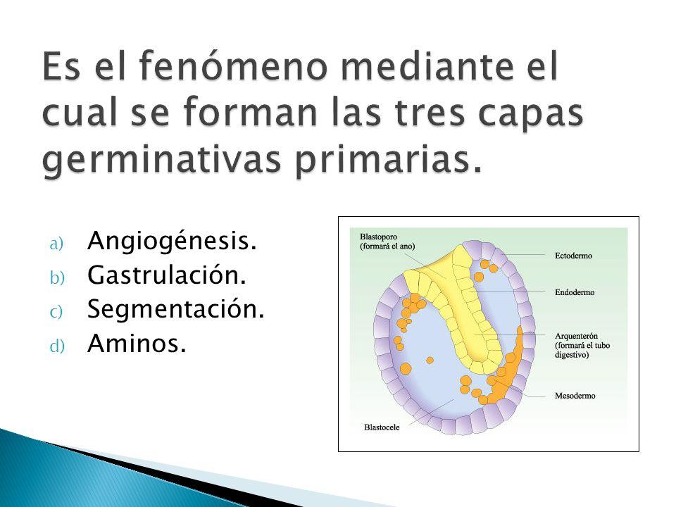 a) Angiogénesis. b) Gastrulación. c) Segmentación. d) Aminos.