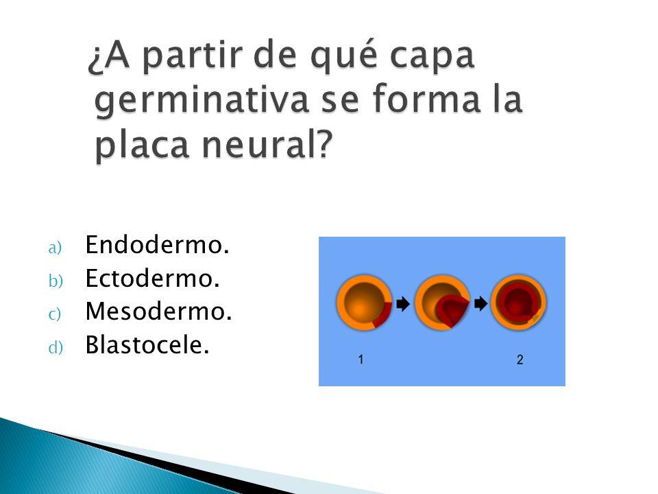 a) Endodermo. b) Ectodermo. c) Mesodermo. d) Blastocele.