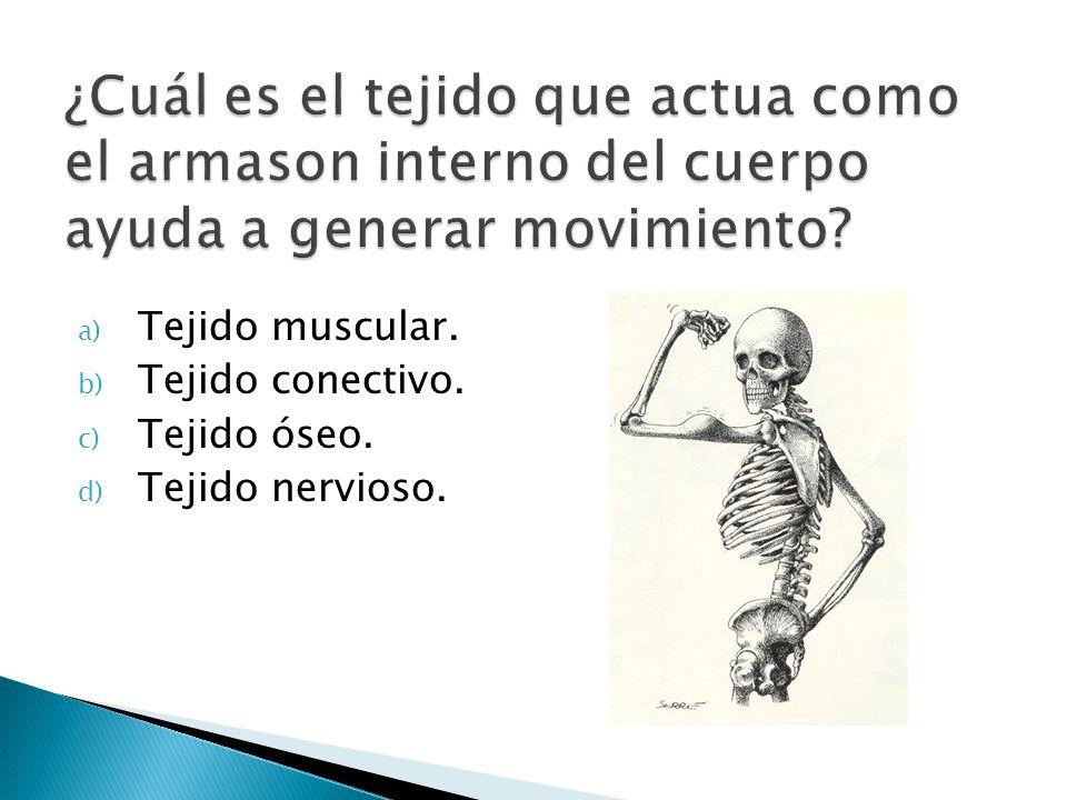 a) Tejido muscular. b) Tejido conectivo. c) Tejido óseo. d) Tejido nervioso.