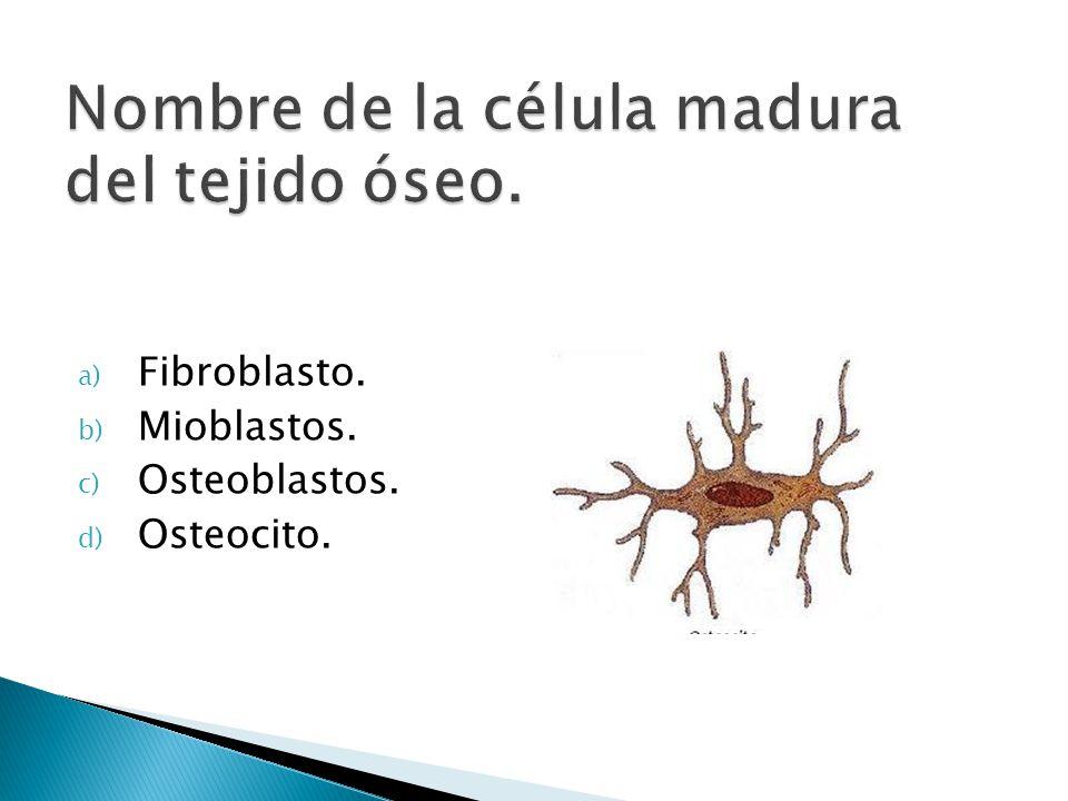 a) Fibroblasto. b) Mioblastos. c) Osteoblastos. d) Osteocito.