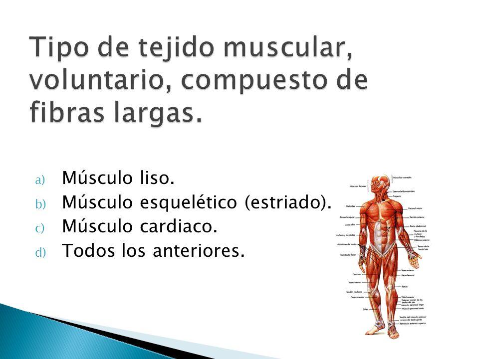 a) Músculo liso. b) Músculo esquelético (estriado). c) Músculo cardiaco. d) Todos los anteriores.
