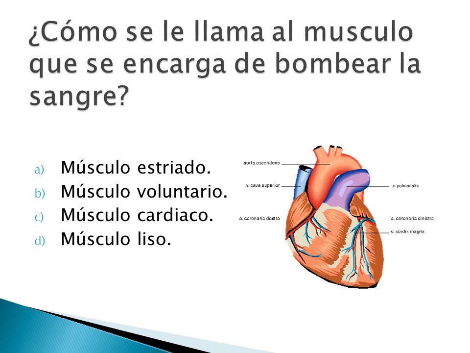 a) Músculo estriado. b) Músculo voluntario. c) Músculo cardiaco. d) Músculo liso.