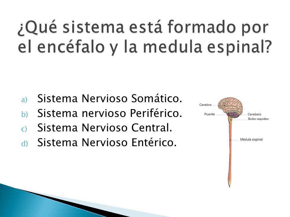 a) Sistema Nervioso Somático. b) Sistema nervioso Periférico. c) Sistema Nervioso Central. d) Sistema Nervioso Entérico.