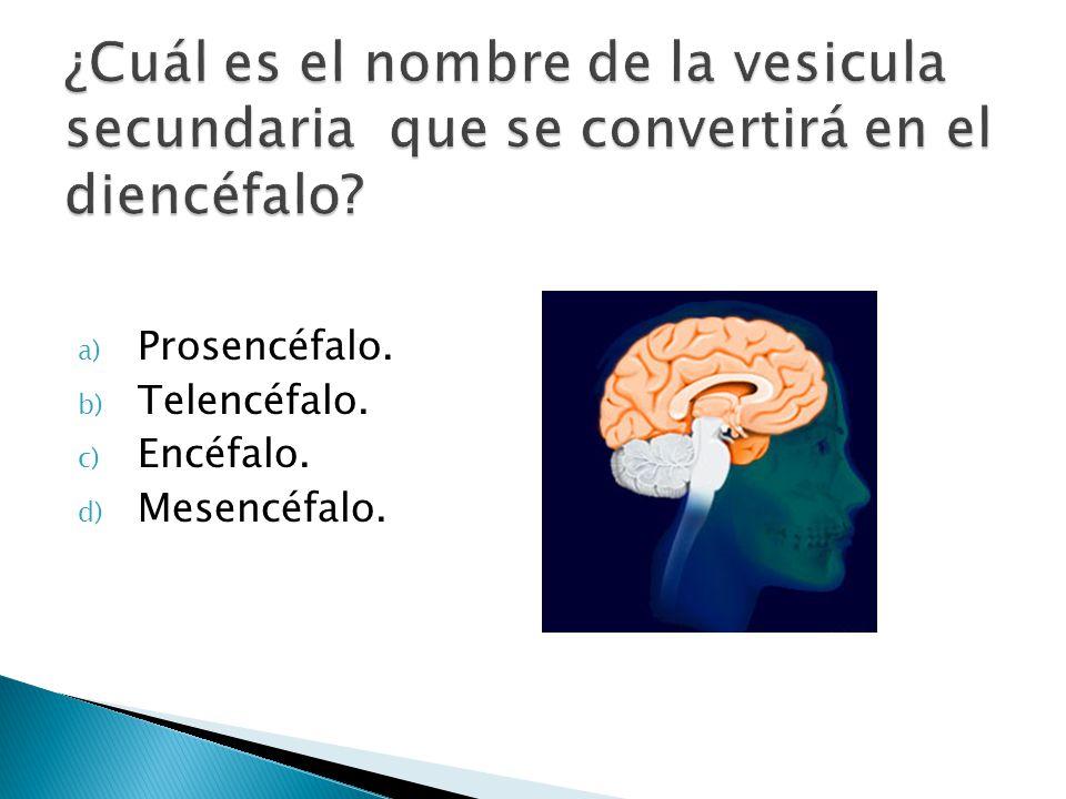 a) Prosencéfalo. b) Telencéfalo. c) Encéfalo. d) Mesencéfalo.