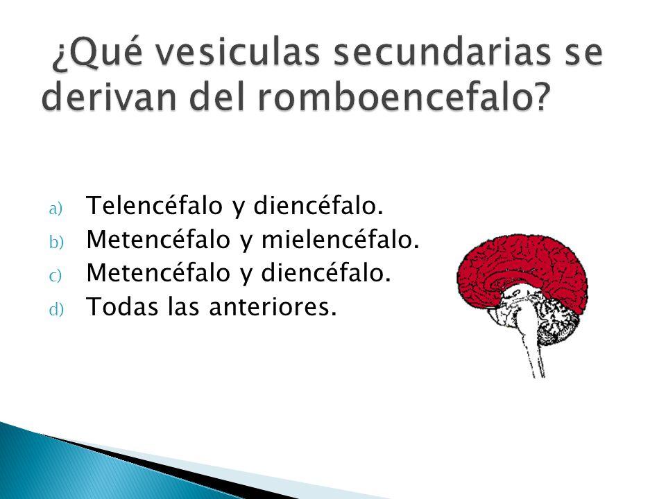 a) Telencéfalo y diencéfalo. b) Metencéfalo y mielencéfalo. c) Metencéfalo y diencéfalo. d) Todas las anteriores.