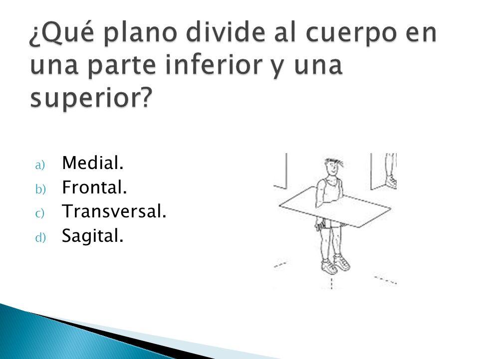 a) Medial. b) Frontal. c) Transversal. d) Sagital.