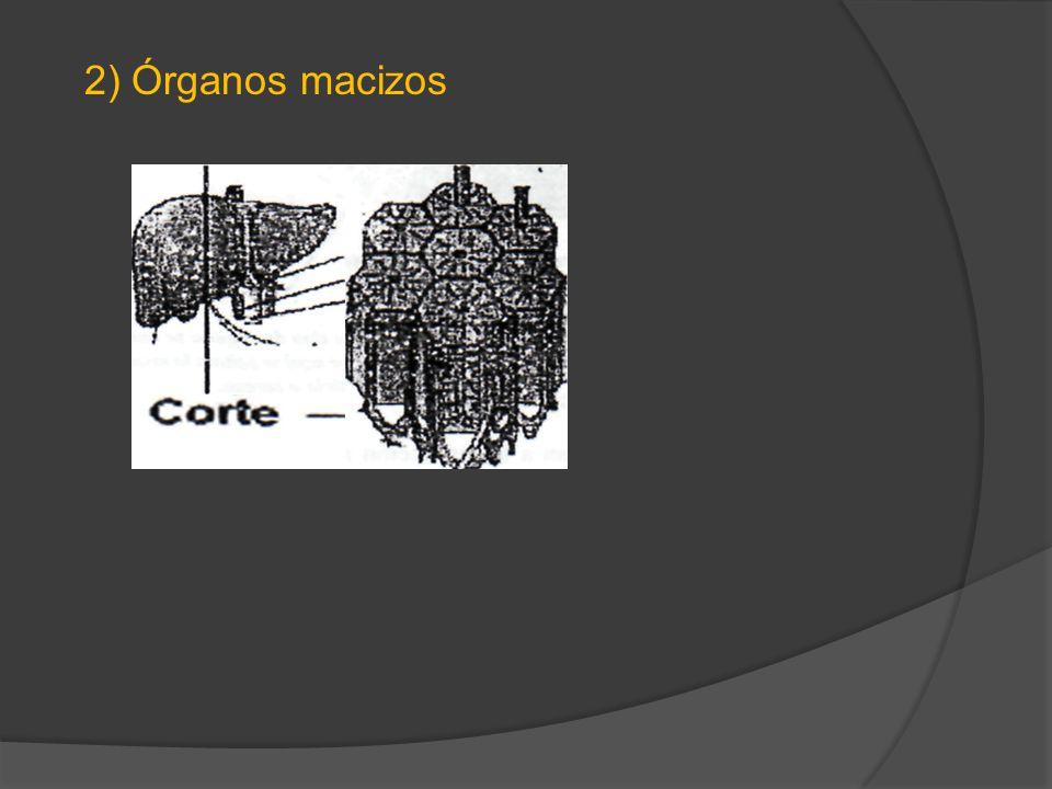 3) Sistema esquelético