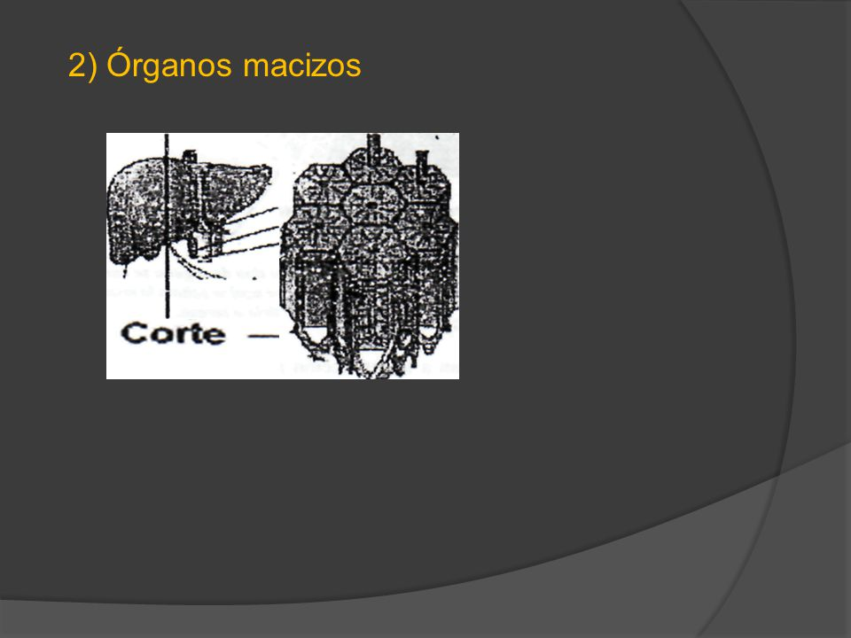 2) Órganos macizos
