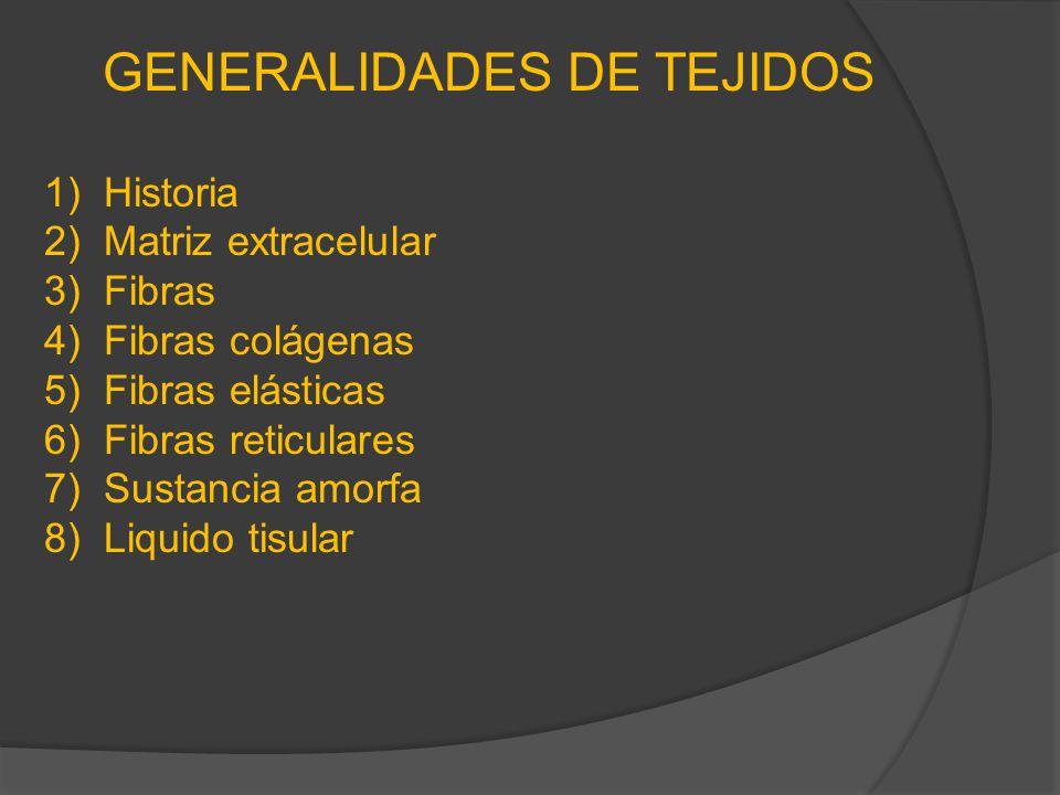 TEJIDO CONJUNTIVO Elementos constituyentes Células: 1)fibroblastos 2)Adipocitos 3)Plasmocitos 4)Mastocitos 5)Histiocitos 6)Leucocitos 7)Linfocitos