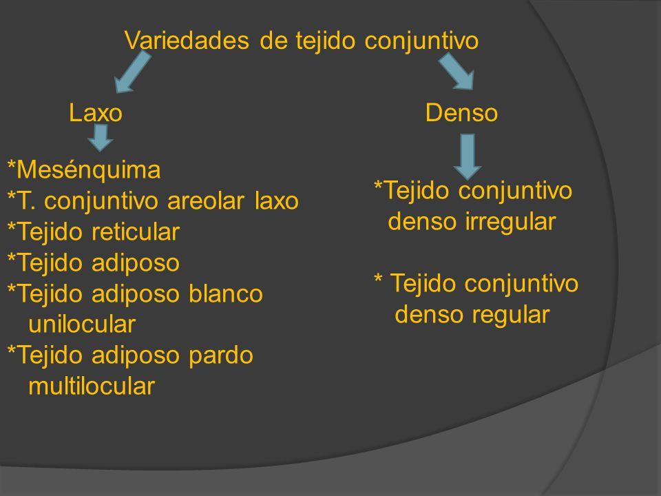 Variedades de tejido conjuntivo LaxoDenso *Mesénquima *T. conjuntivo areolar laxo *Tejido reticular *Tejido adiposo *Tejido adiposo blanco unilocular