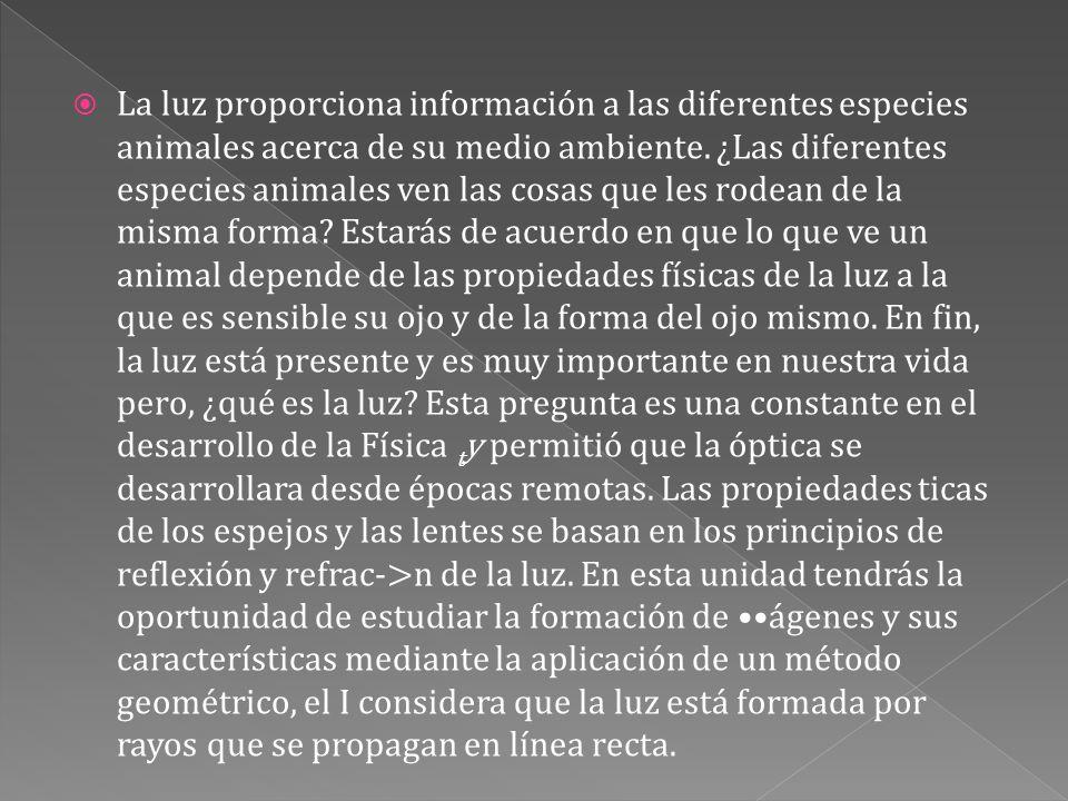 La luz proporciona información a las diferentes especies animales acerca de su medio ambiente. ¿Las diferentes especies animales ven las cosas que le